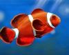 Branding Ikan Hias Indonesia Potensial Tingkatkan Nilai Ekspor