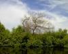 Separuh Ekosisitem Mangrove yang Tumbuh di Indonesia Mengalami Kerusakan