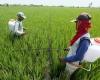 CIDES: Indonesia Harus Miliki Strategi Dan Roadmap Adaptasi Perubahan Iklim Pada Komoditi Pertanian