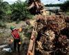 Lawan Diskriminasi Sawit, Indonesia Gugat Uni Eropa di WTO