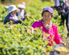 Ketahanan Pangan Masuk Kebijakan Utama di China
