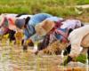 Reforma Agraria, Penataan Akses Genjot Ekonomi Masyarakat