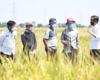 Jokowi: Pemerintah Tidak Senang Impor Beras